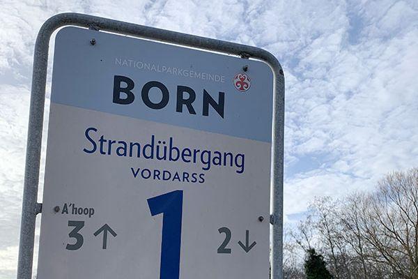 born-strand524515AA-EFAC-8EAE-7ACA-E5C56F65071A.jpeg